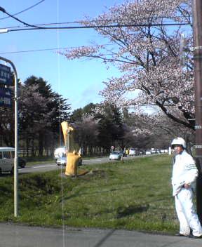 静内 桜並木 昼ver.